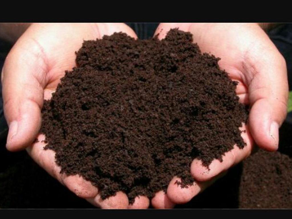 Se realizará un taller sobre lombricompuestos para la obtención de abono y fertilizante orgánico